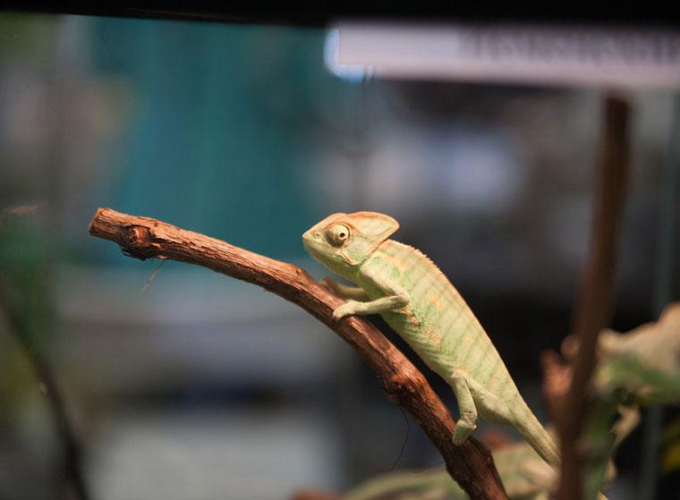 Winterschlaf von Reptilien: Terrarium im Winter