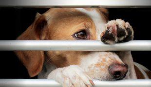 Tierschutzorganisationen
