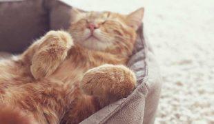 Erstausstattung für die Katze
