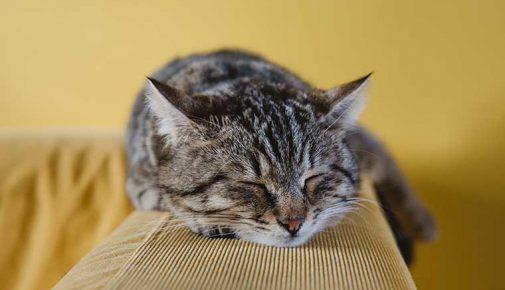 Allergien bei der Katze