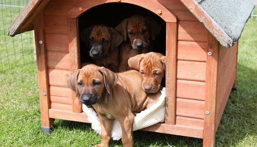 Hundekauf beim Züchter