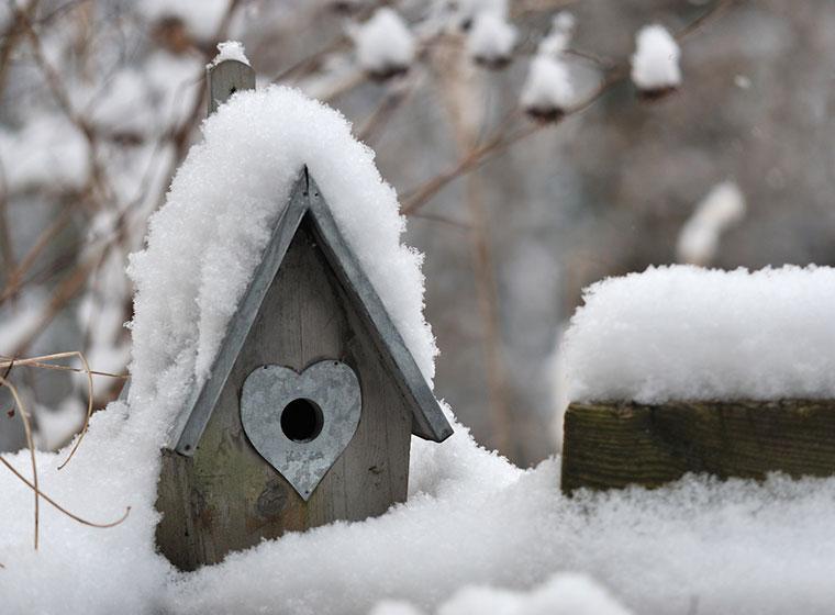 Vogelvoliere im Winter: Außenvolieren in der kalten Jahreszeit