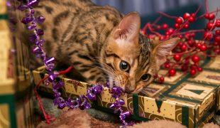 Weihnachten mit Haustieren: Weihnachtszeit mit Hund und Katze