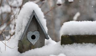 Vogelvoliere im Winter