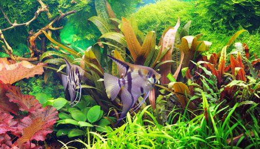 Aquarium Einrichten Tipps Für Den Aquaristik Neuling Zooroyal Magazin