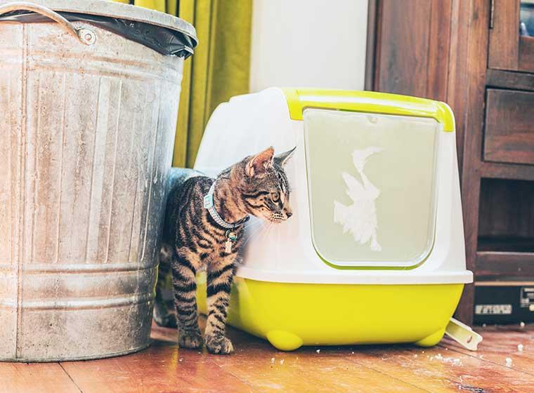 Katzen stubenrein bekommen