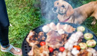 Grillen mit dem Hund