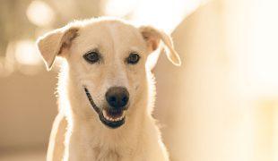 Zahngesundheit bei Hunden