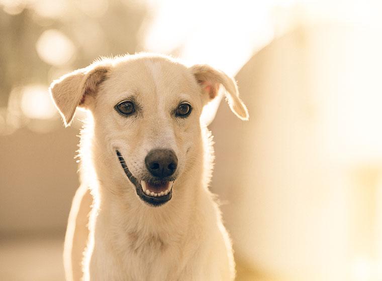 Zahngesundheit von Hunden