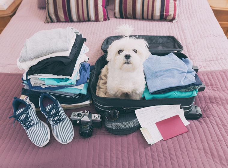Reisen mit Haustier: Checkliste Urlaub mit dem Hund