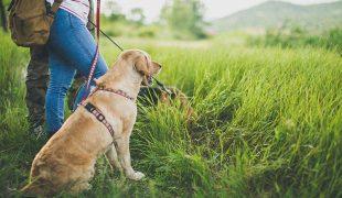 Urlaub mit Vierbeinern: Reiseziele mit Hund