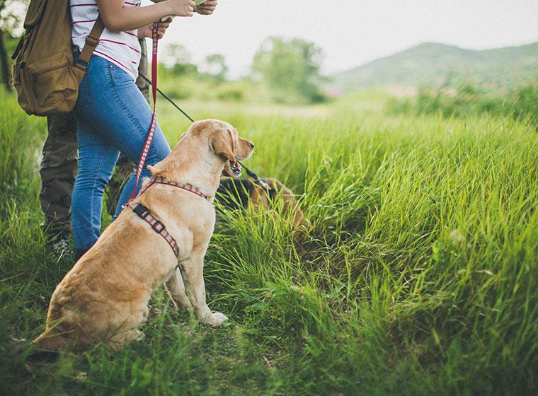 Urlaub mit Vierbeiner: Reiseziele mit Hund