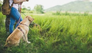 Reiseziele mit Hund