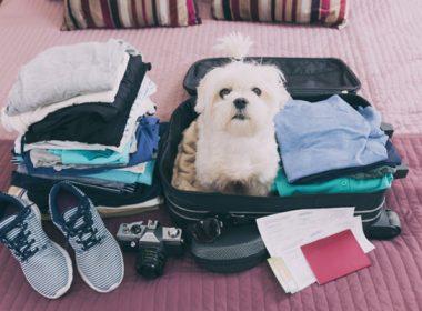 Checkliste Urlaub mit dem Hund