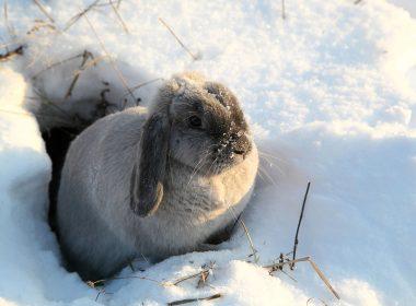 Kleintierhaltung im Winter