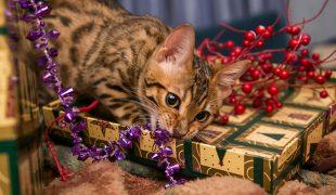 Entspannte Weihnachtszeit mit Hund und Katze