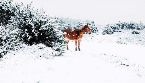 Pferdefütterung im Winter