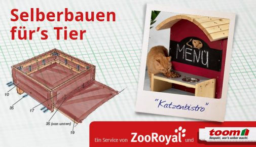 Futterbar für Katzen selber bauen