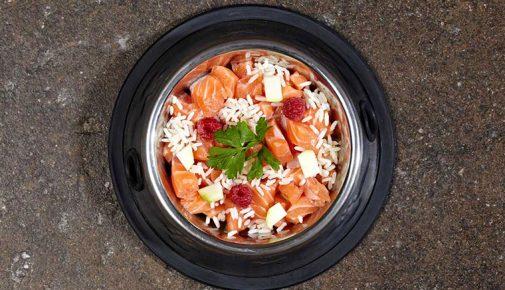 BARF Rezept Lachs Zucchini