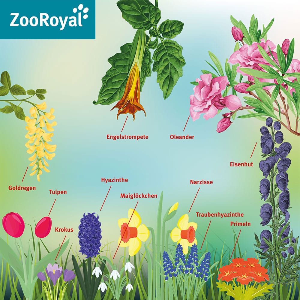 Giftige Pflanzen im Frühling