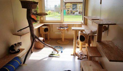 Felidae Kleintierschutzverein Katzenzimmer