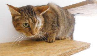 Felidae Kleintierschutzverein Katze Tissy