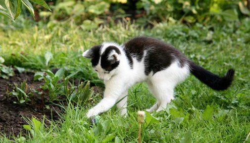 Garten katzensicher machen