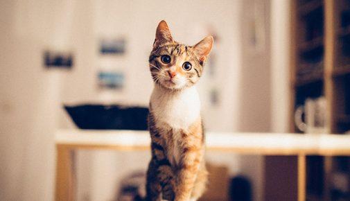 Katze kaufen