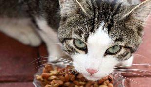 Katzenfutter frisch halten