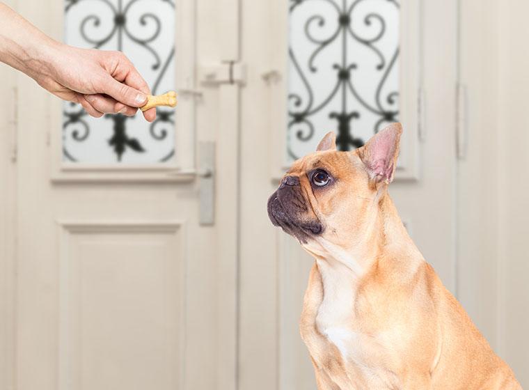 mit dem Hund Geduld und Konzentration üben