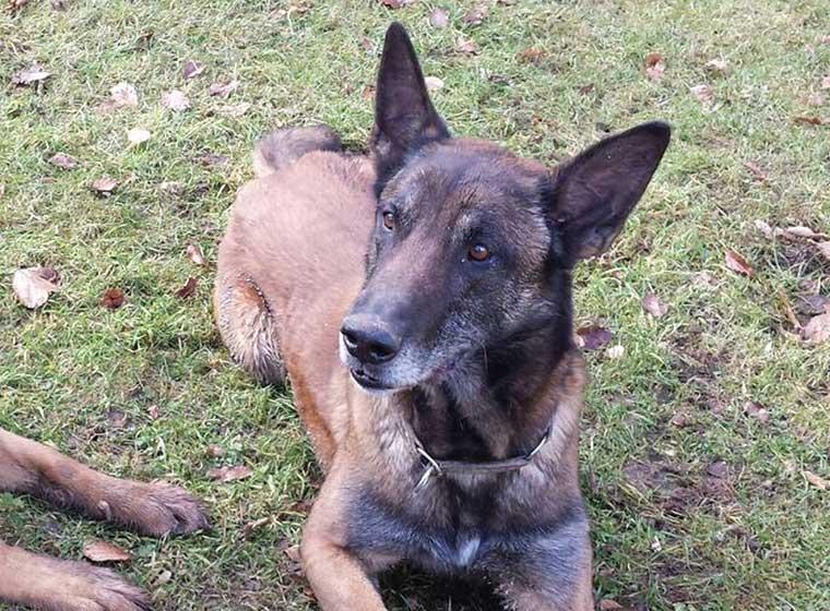 Tierheim Detmold Hund Casper