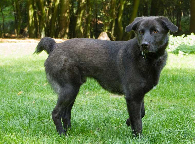 Tierheim Detmold Hund Nico