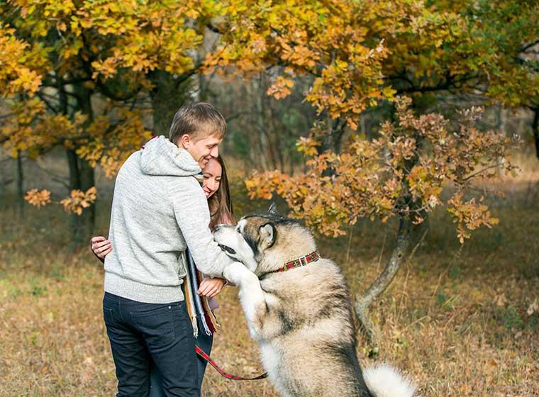 Hundeerziehung: Anspringen stoppen