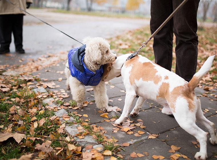 Begegnung mit anderen Hunden