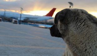 Fliegen mit Hund