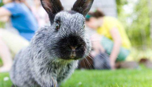 Gefahren für Kaninchen