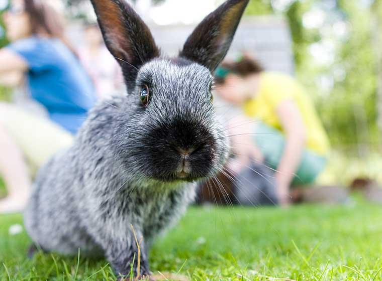 gefahren f r kaninchen im freilauf zooroyal magazin. Black Bedroom Furniture Sets. Home Design Ideas