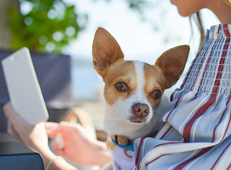 Hundeerziehung: Hund im Mittelpunkt