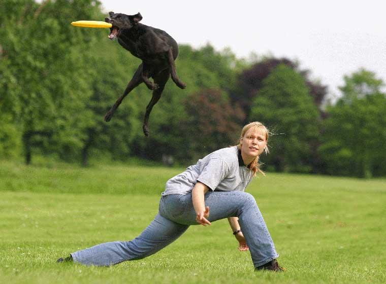 Hundefrisbee Sport für Hund und Halter