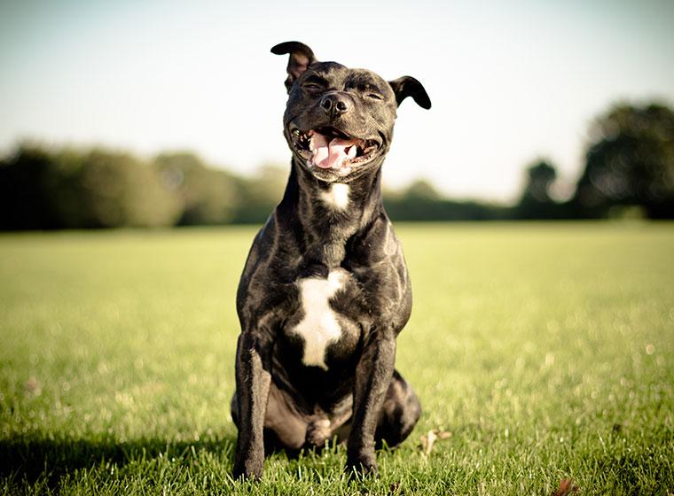 Kampfhunde