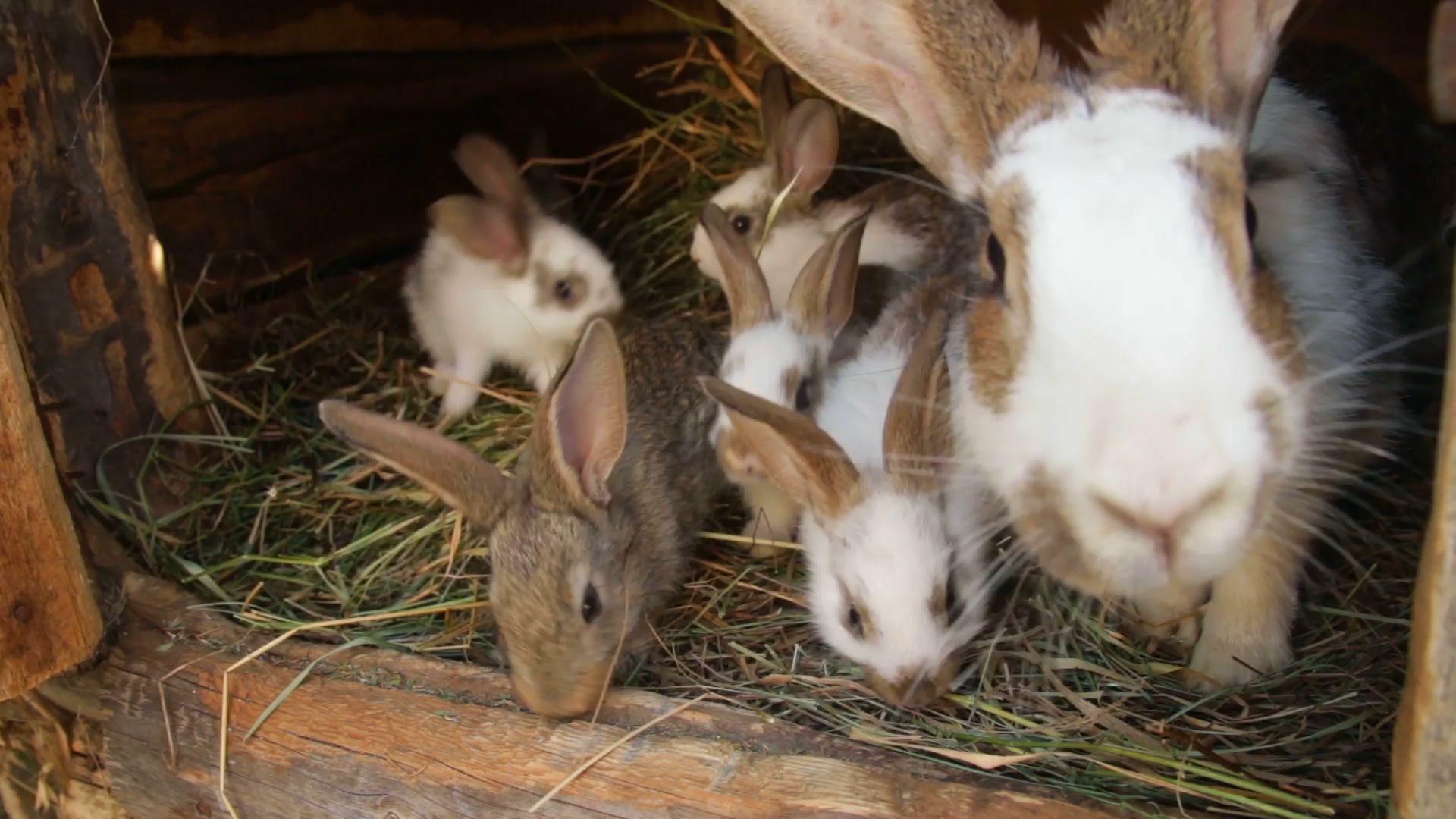 nachwuchs bei kaninchen aufzucht und pflege zooroyal