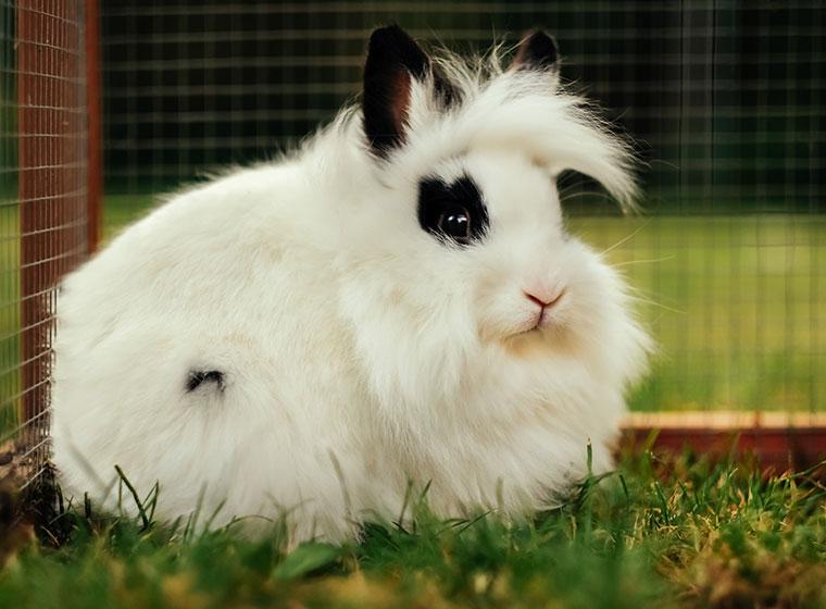 Kaninchenstall