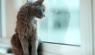 Katzenhaltung in der Mietwohnung