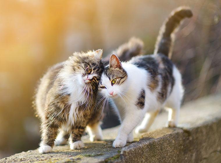 Katzen vergesellschaften