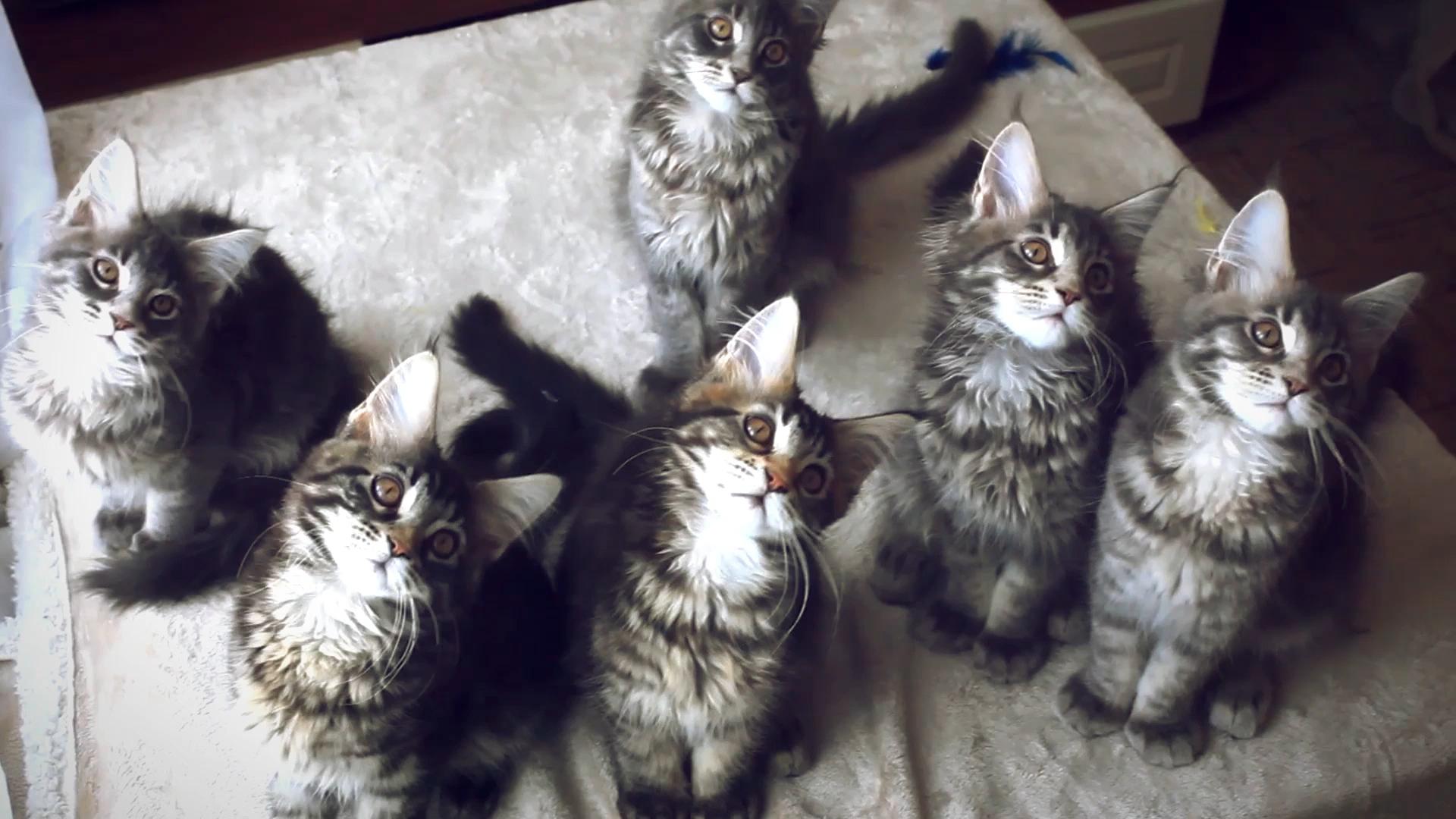 Katzenbabys von mir zeig bilder Katzenbabys