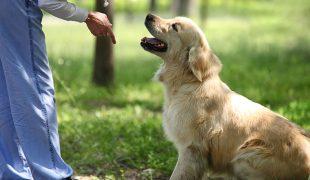 Kommandos Hund