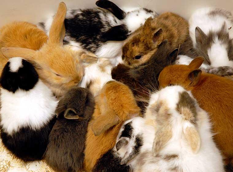 Nachwuchs bei Kaninchen