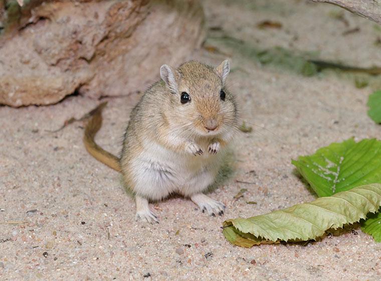 Eine Maus Artgerecht Als Haustier Halten Zooroyal Magazin