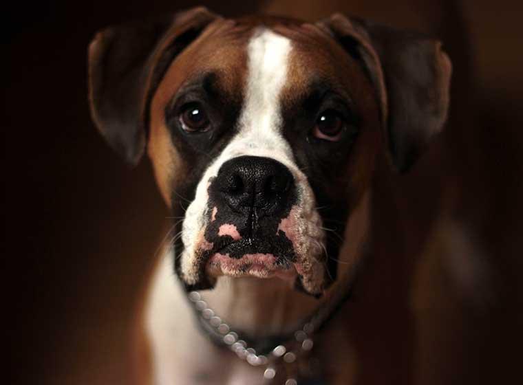 Tierheim-Hunde