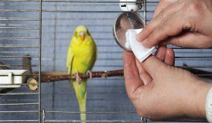 Vogelkäfig reinigen